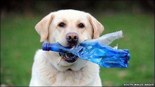 Reciclare plastic pentru catei