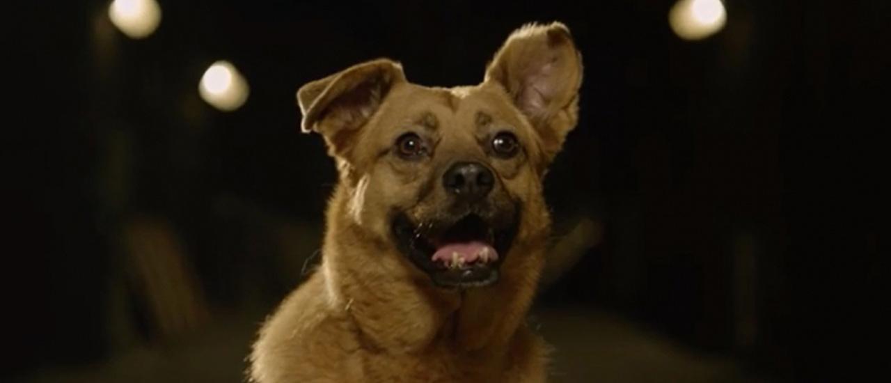 Adoptă un câine şi salvează o viaţă – o campanie realizată de caţei